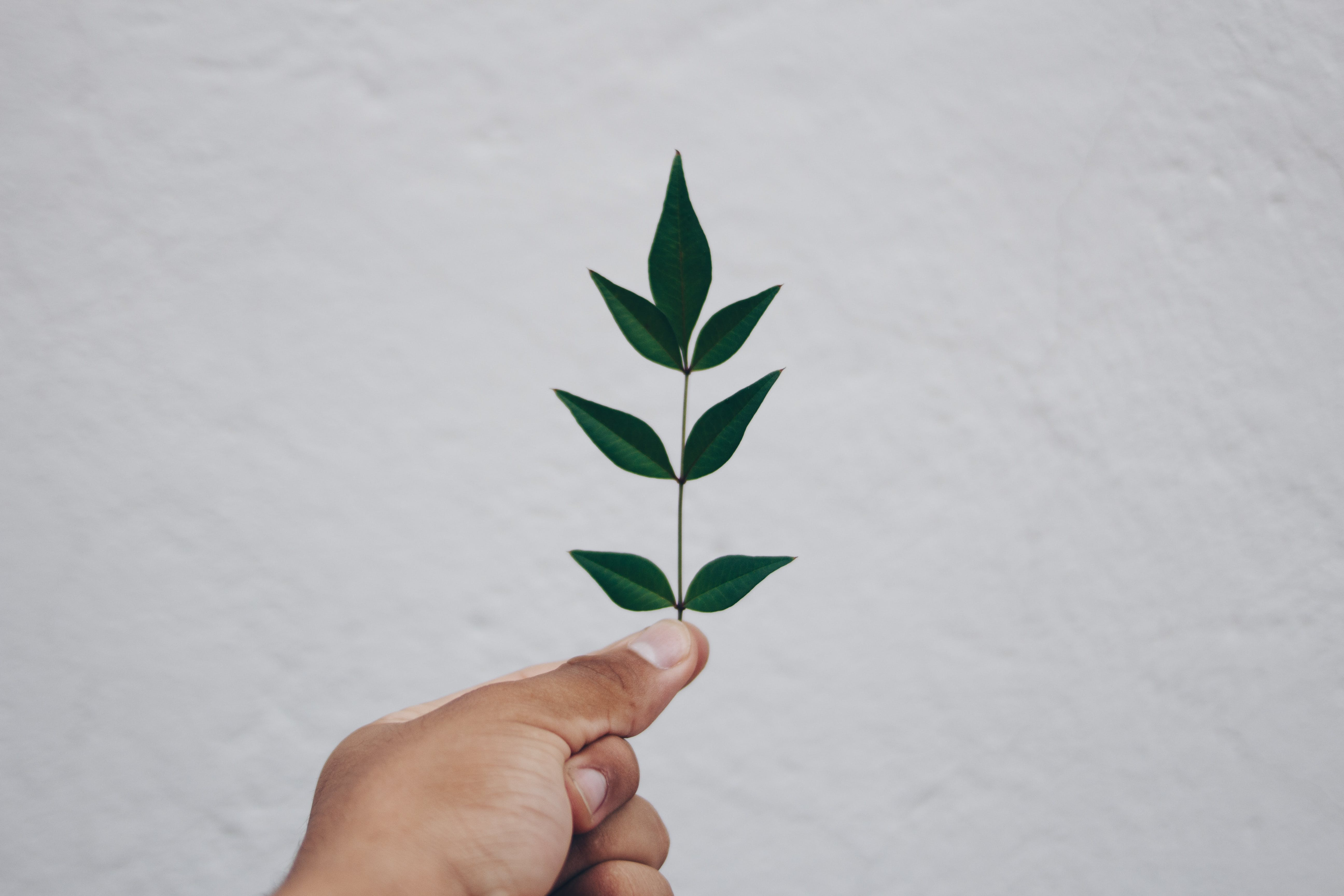 Close-up of Hand Holding Plant Against Sky