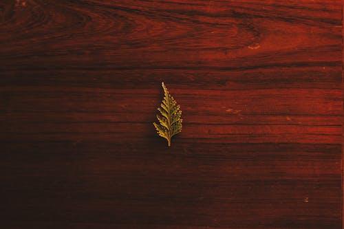 Foto d'estoc gratuïta de de fusta, delicat, disseny, fer la planxa