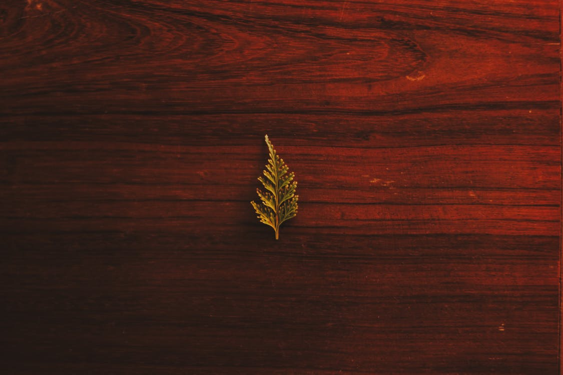 Close-up of Leaf on Wooden Plank