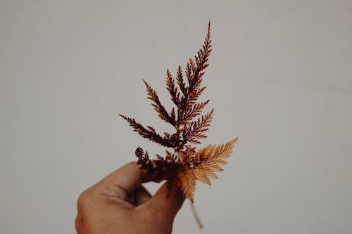 Foto profissional grátis de árvore, atraente, borrão, castanho