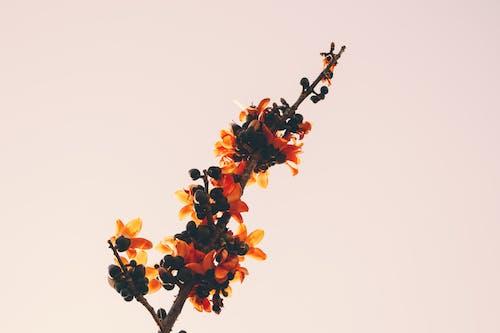 Бесплатное стоковое фото с HD-обои, ветвь, дерево, дикий