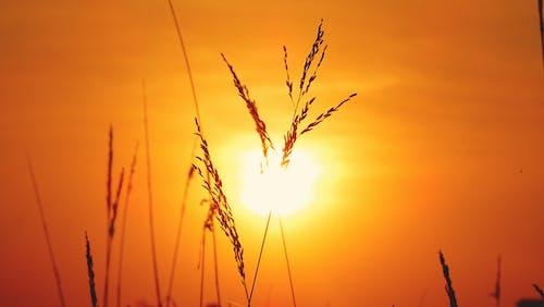 傍晚的天空, 傍晚的太陽, 农村, 农村的场景 的 免费素材照片