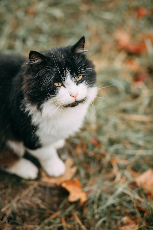 Základová fotografie zdarma na téma dívání, domácí mazlíček, fotografování zvířat, kočičí oči