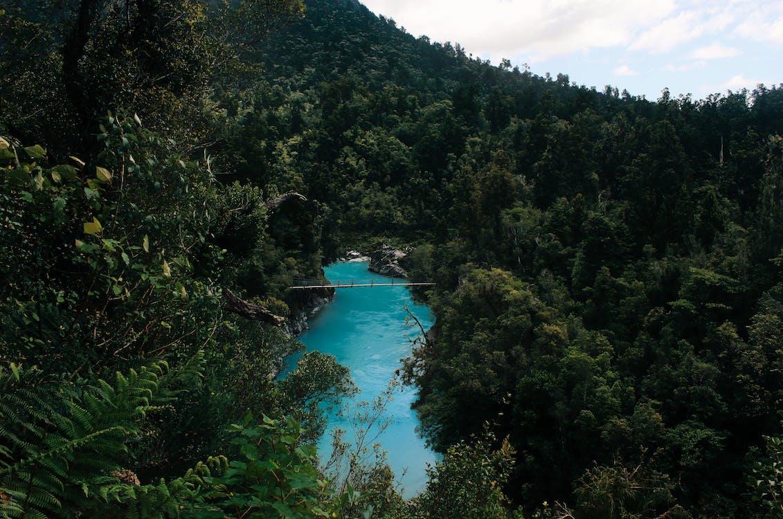Darmowe zdjęcie z galerii z droga, góry, las