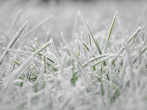 ハーブ, 凍結する, 庭園, 雪の無料の写真素材