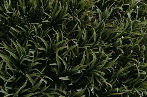 綠草地, 花園, 草, 草原 的 免费素材照片