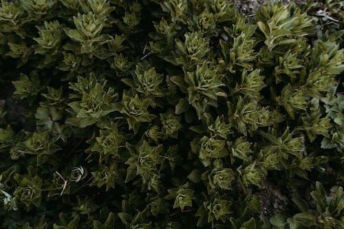 Бесплатное стоковое фото с заводы, зеленый, листья, сад