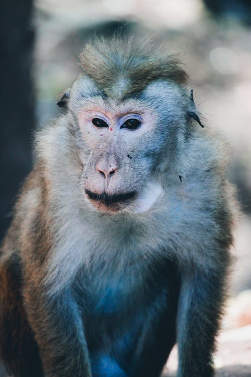 Ingyenes stockfotó állat, állatfotók, állati portré, állatvilág témában