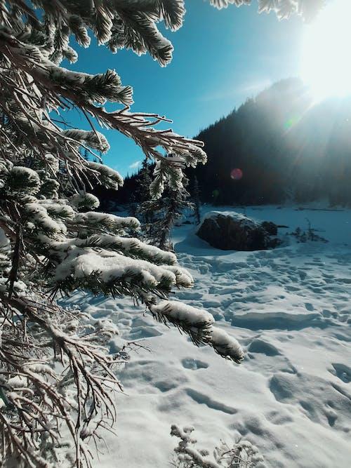 Free stock photo of mountain, national park, pine trees, ray of sunshine