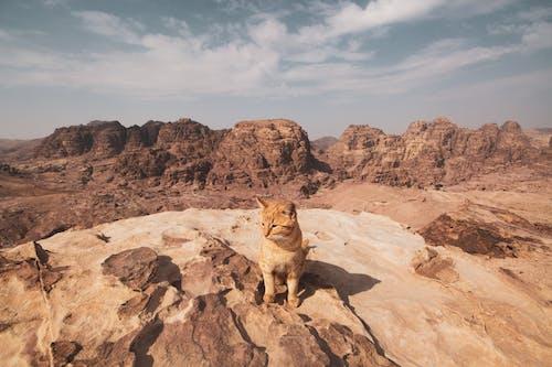 คลังภาพถ่ายฟรี ของ การก่อตัวทางธรณีวิทยา, ทะเลทราย, ภูมิทัศน์, มีแต่หิน