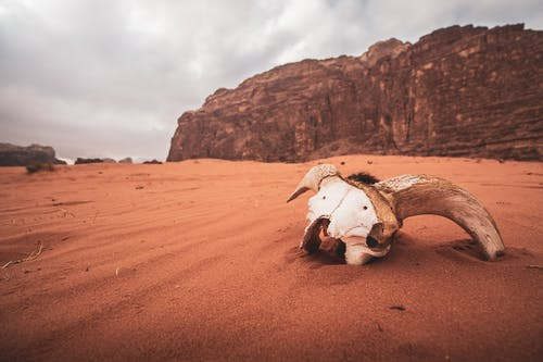 White Animal Skull on Sand