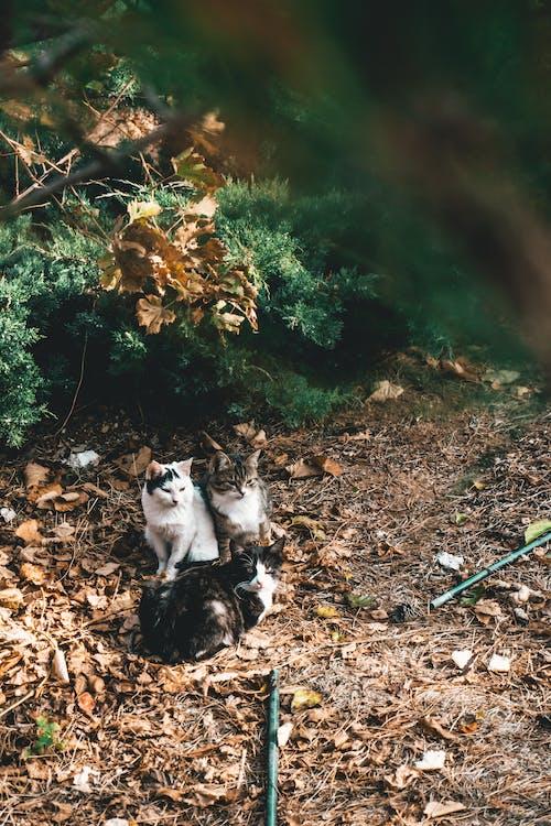 고양이, 고양잇과 동물, 동물, 반려동물의 무료 스톡 사진
