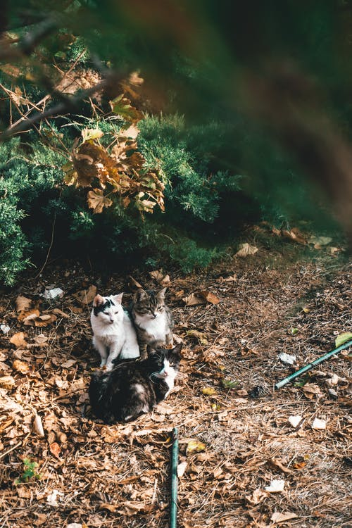 Photo Of Cats