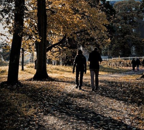 Ilmainen kuvapankkikuva tunnisteilla elämää luonnossa, kauneus luonnossa, keskuspuisto, luonnon kauneus