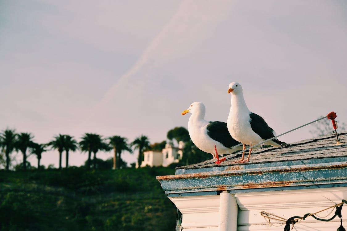 加州, 房屋, 海灘