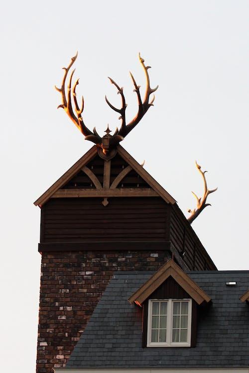 ホテル, ルーフ, ローアングルショット, 伝統的の無料の写真素材