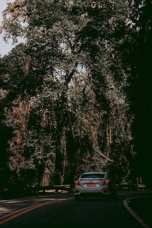 Foto d'estoc gratuïta de arbres, asfalt, automòbil, carretera