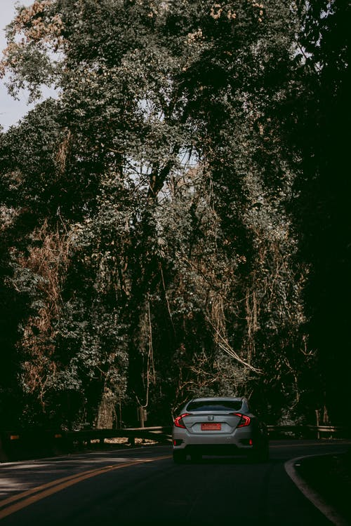 Fotos de stock gratuitas de arboles, asfalto, automóvil, carretera