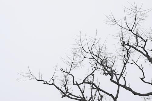 Fotos de stock gratuitas de arboles, blanco y negro, copa del árbol, gris