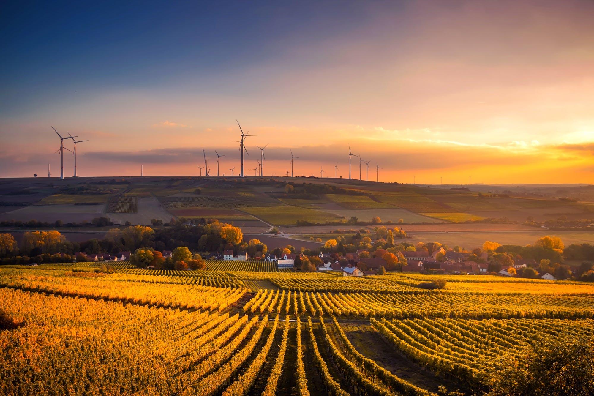 aerogeneradors, alba, arbres