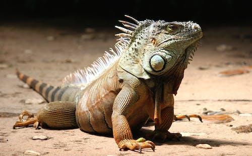 Základová fotografie zdarma na téma dívání, divočina, divoké zvíře, druh