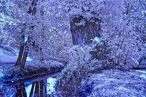 나무, 물, 적외선, 하이킹의 무료 스톡 사진