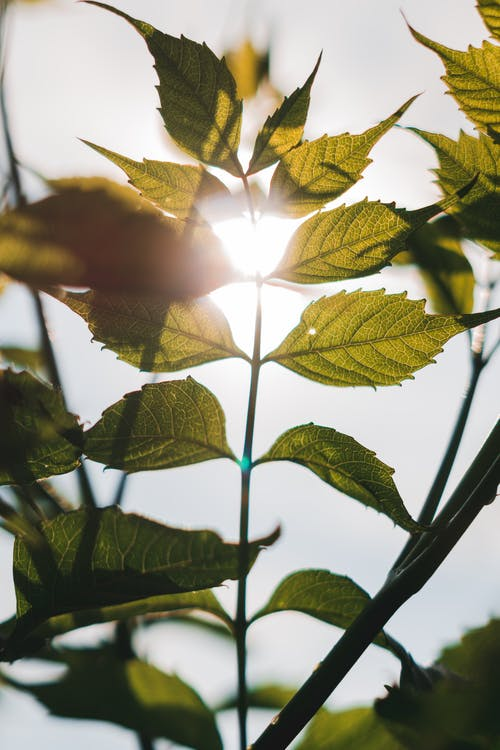 Ingyenes stockfotó botanikus, friss, frissesség, gyárak témában