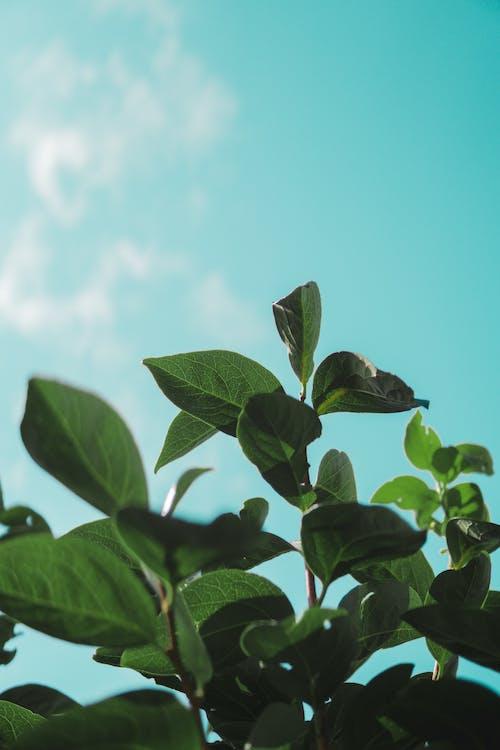 Darmowe zdjęcie z galerii z flora, martwa natura, zielone liście, zielone rośliny