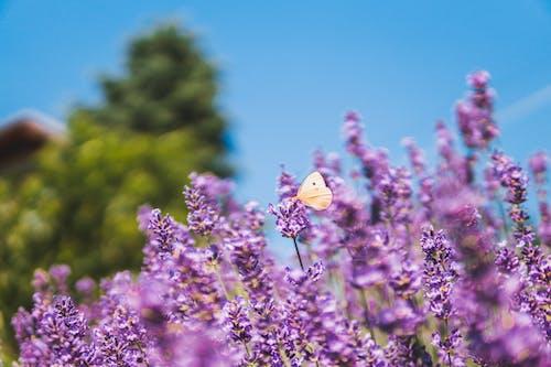 Ảnh lưu trữ miễn phí về Con bướm, hệ thực vật, hoa, người cho vay