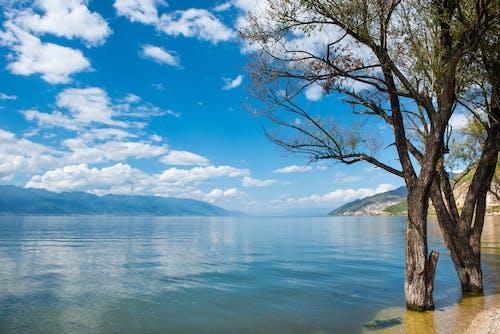 Foto d'estoc gratuïta de aigua, arbres, branques, cel