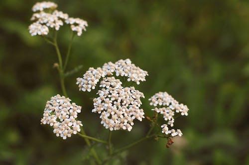 Immagine gratuita di fiori, fotografia della natura, natura, sfondo della natura