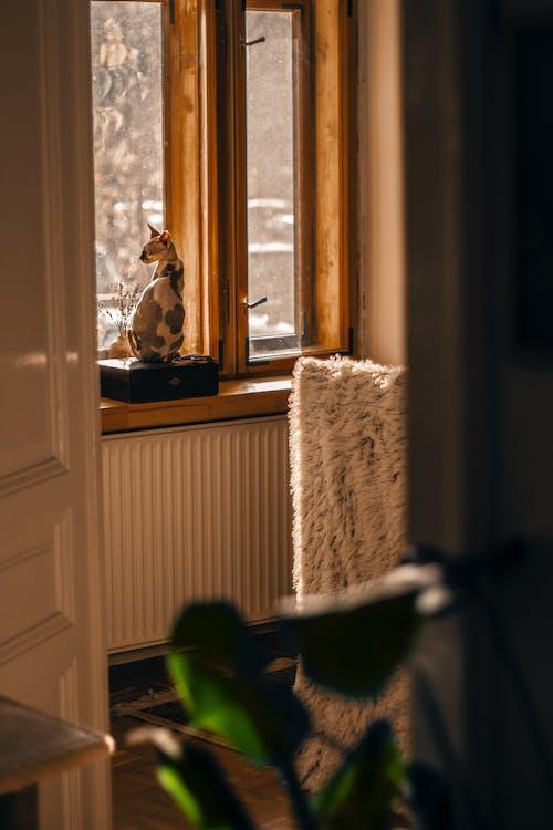 Sphynx Cat by Glass Window