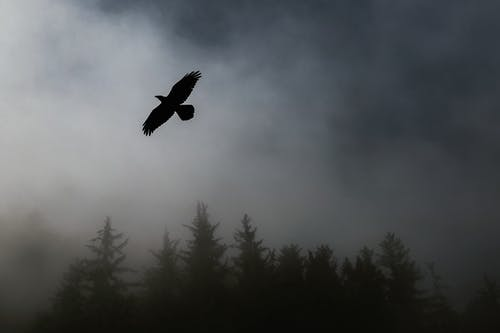 Bird flying over Trees during Foggy Weather