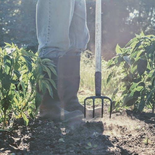 농부, 열심히 일하는, 원예의 무료 스톡 사진