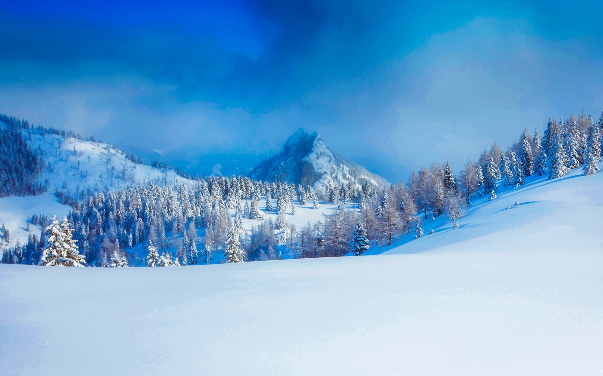 Panoramic View of Trees on Snow Covered Landscape