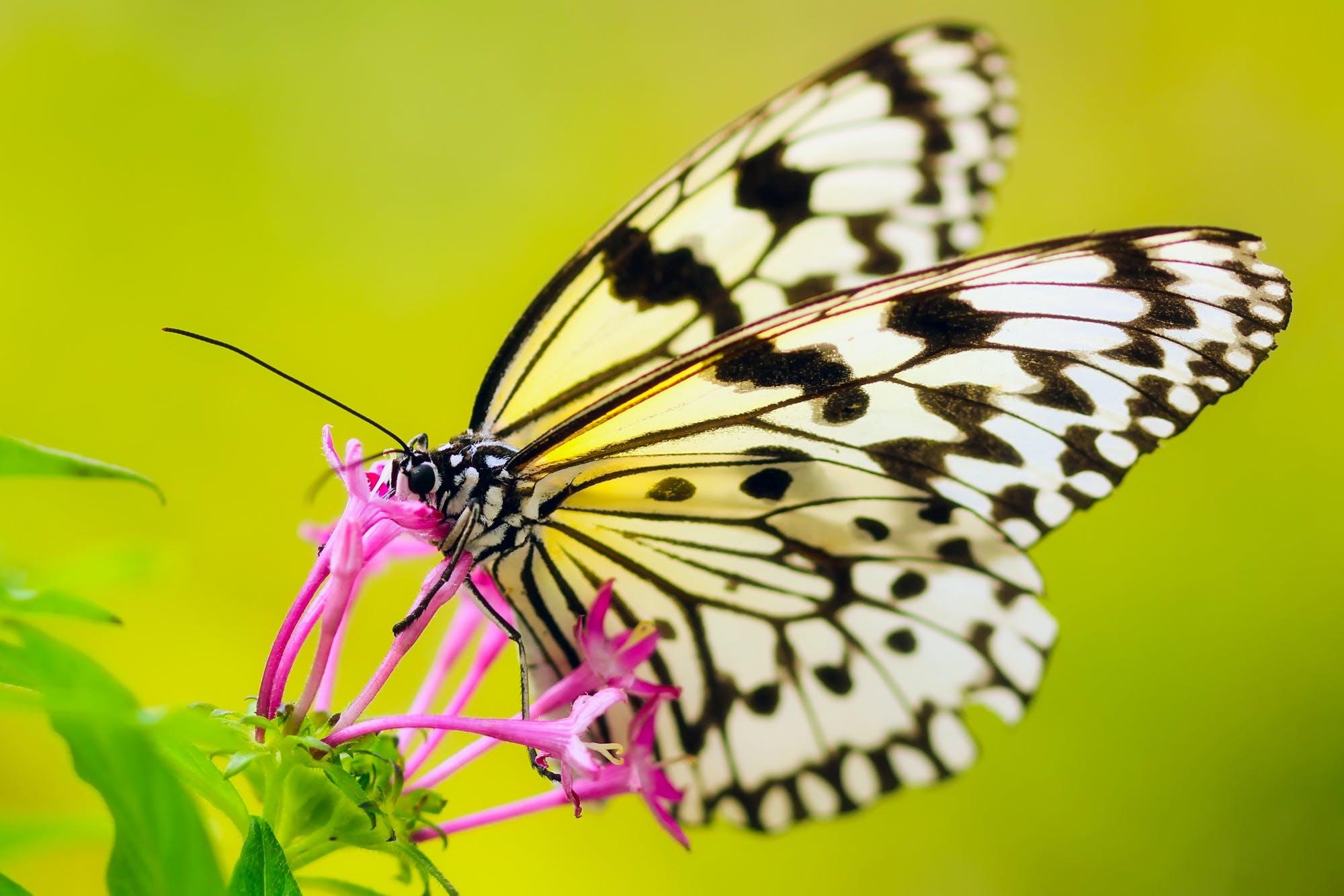 곤충, 군주, 꽃, 나비의 무료 스톡 사진