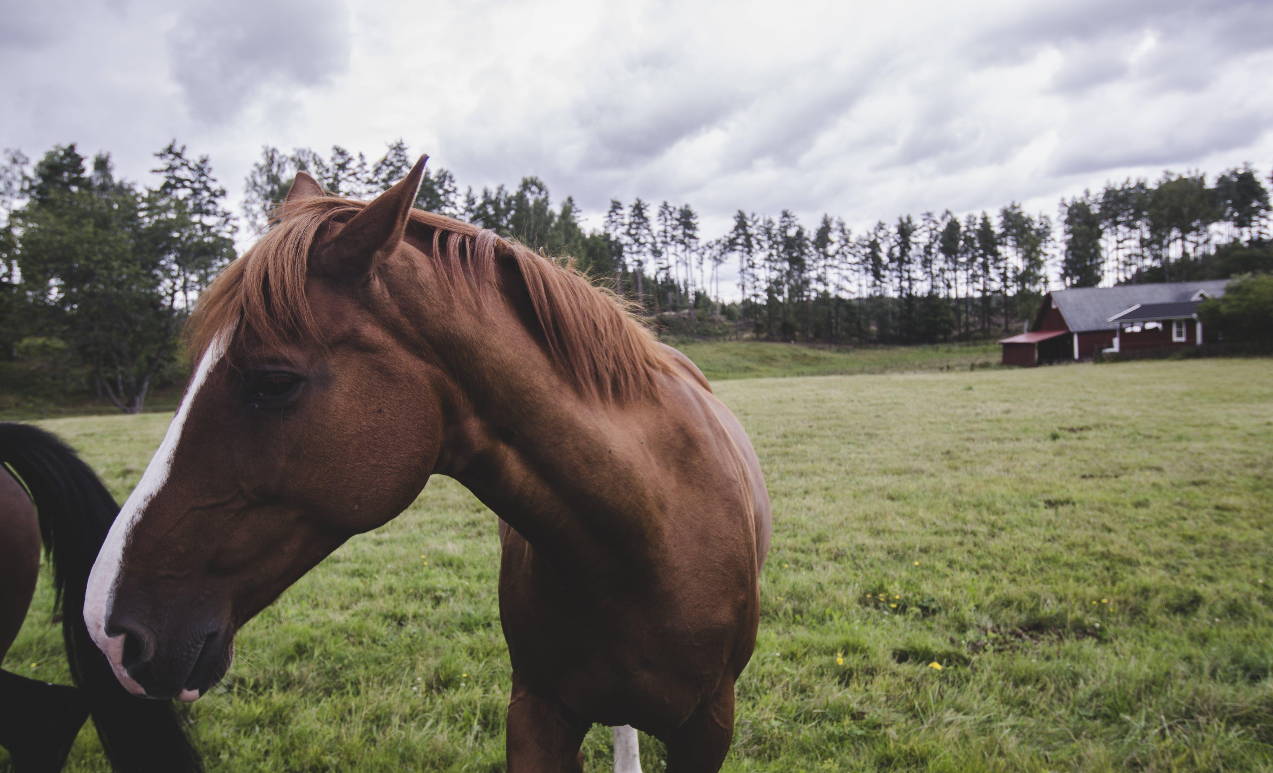 ahır, alan, at, Çiftlik içeren Ücretsiz stok fotoğraf