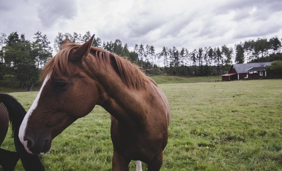 Horse on Landscape Against Sky