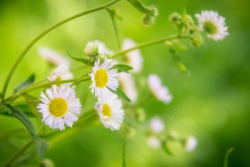 bitki, bitki örtüsü, Çiçek açmak, Çiçekler içeren Ücretsiz stok fotoğraf