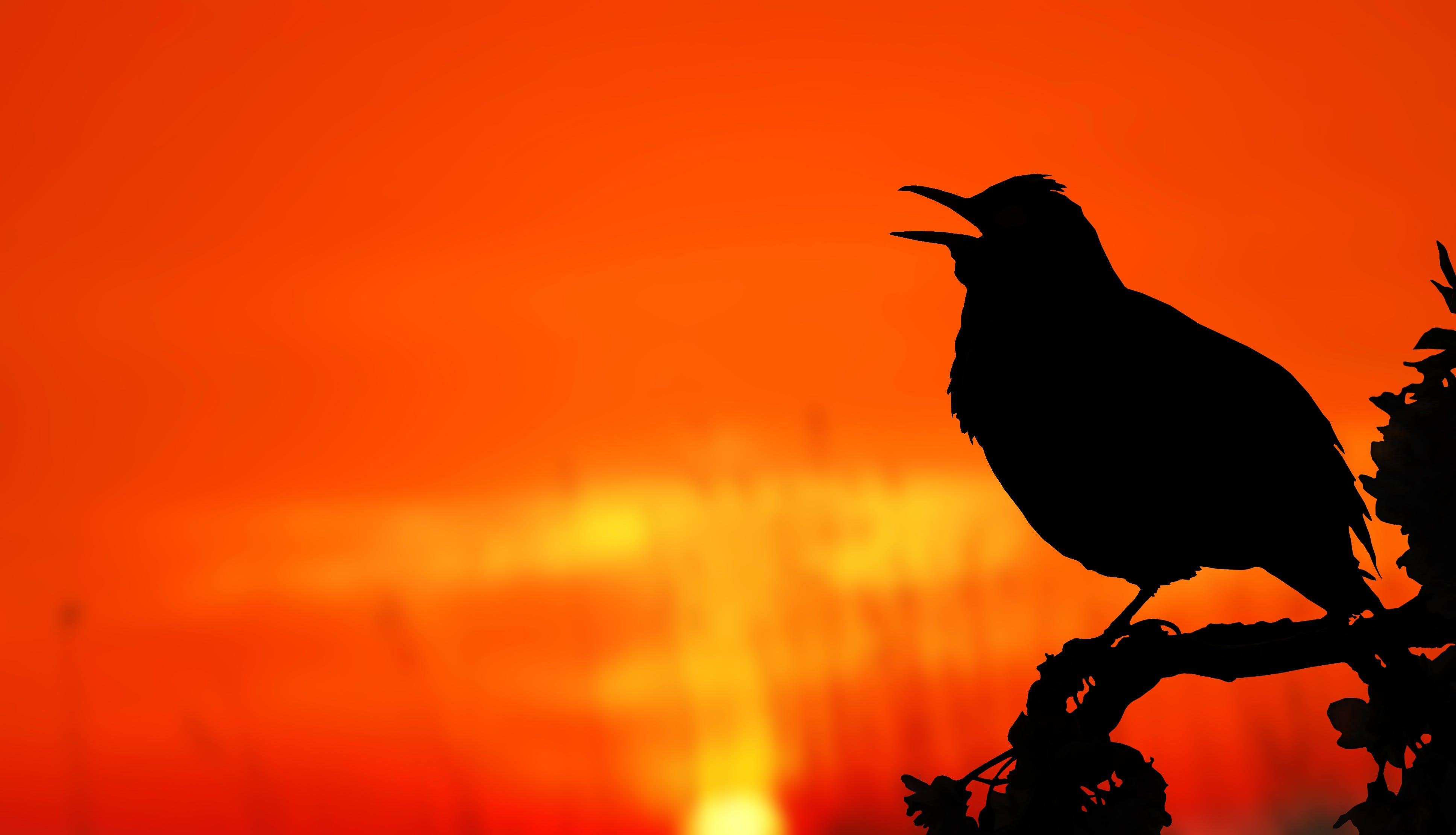 Close-up of Silhouette Bird Perching on Orange Sunset