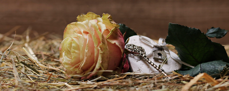 Free stock photo of love, heart, romantic, plant