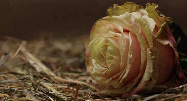 Free stock photo of love, romantic, plant, brown