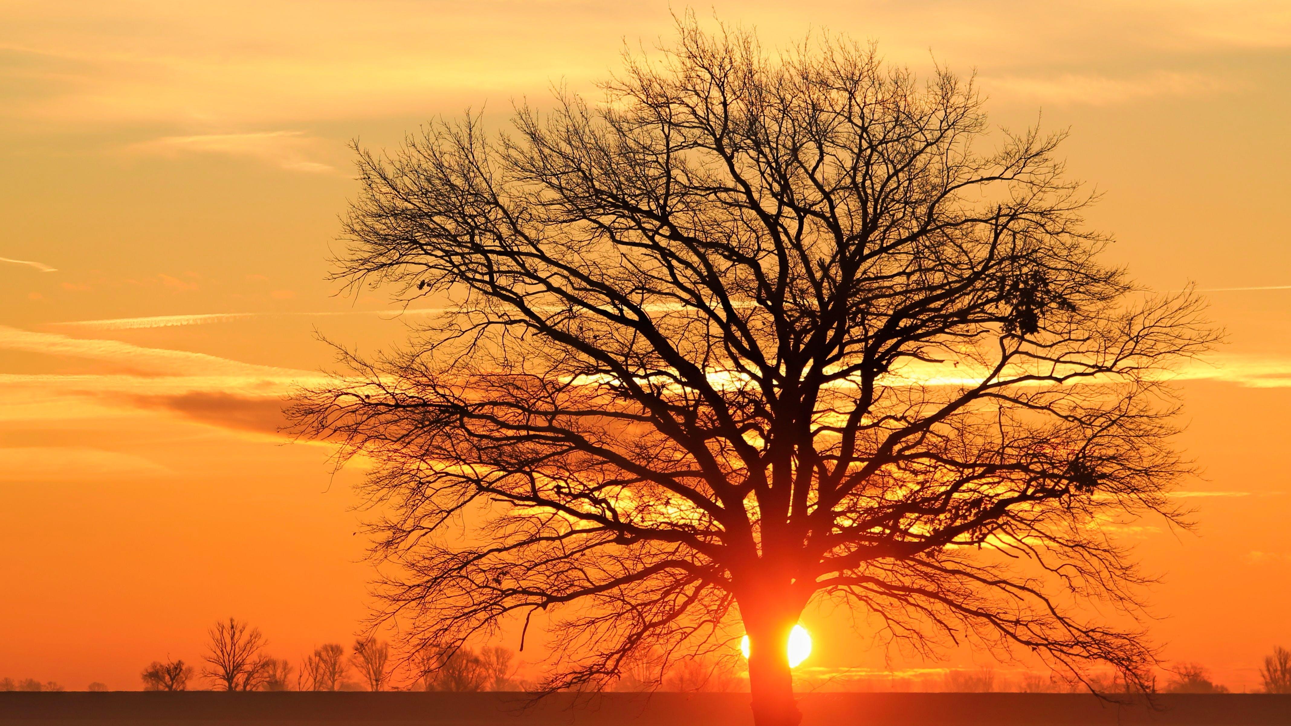 Бесплатное стоковое фото с вечер, вечернее небо, дерево, закат