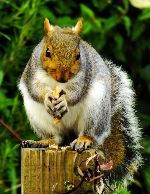 動物, 可愛, 可愛的, 吃 的 免費圖庫相片