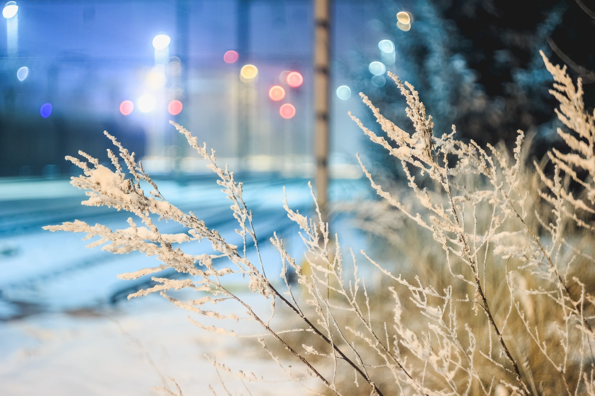 Close-up of Frozen Plants at Night