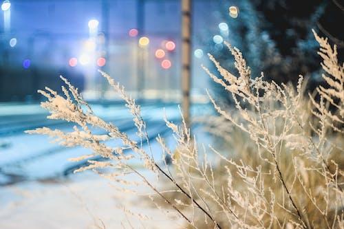 Foto d'estoc gratuïta de arbres, arbustos, branca, brillant