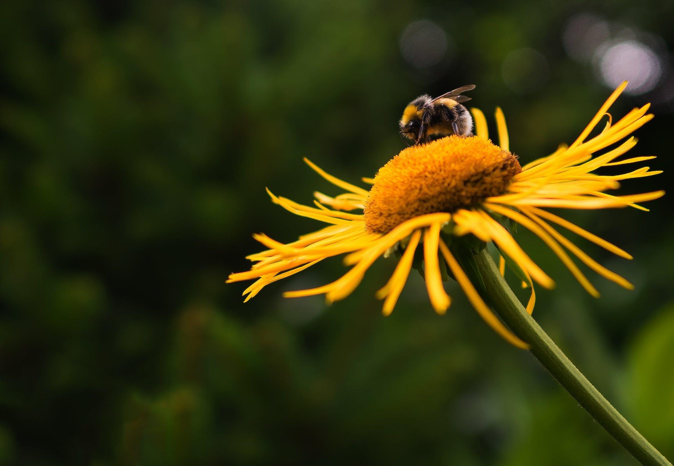 Kostenloses Stock Foto zu natur, garten, gelb, pflanze
