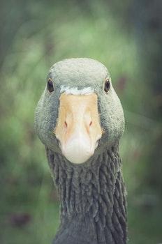 Free stock photo of nature, bird, animal, head