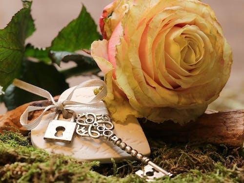 Imagine de stoc gratuită din cheie, delicat, dragoste, floare