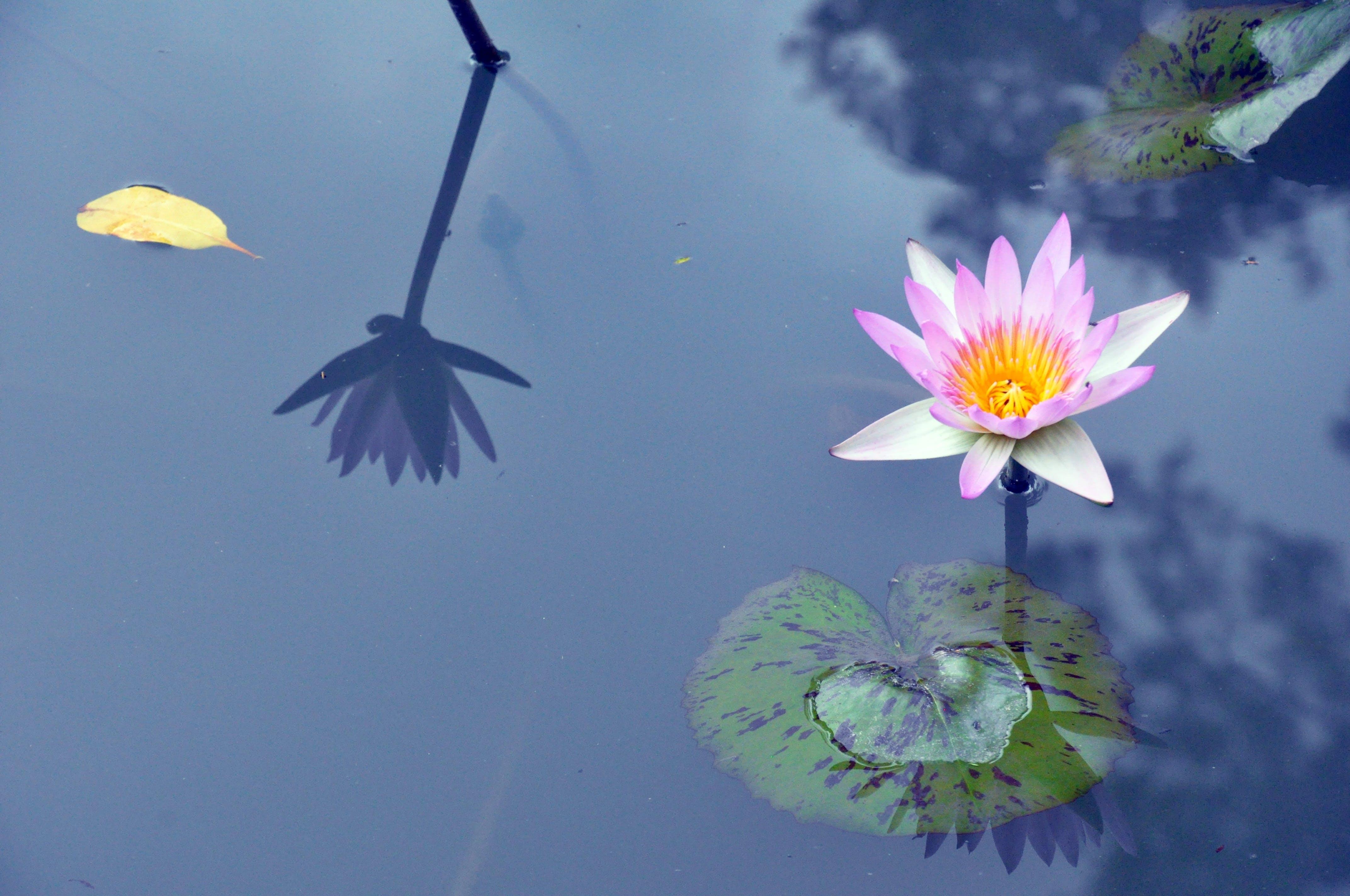Free stock photo of nature, water, summer, purple